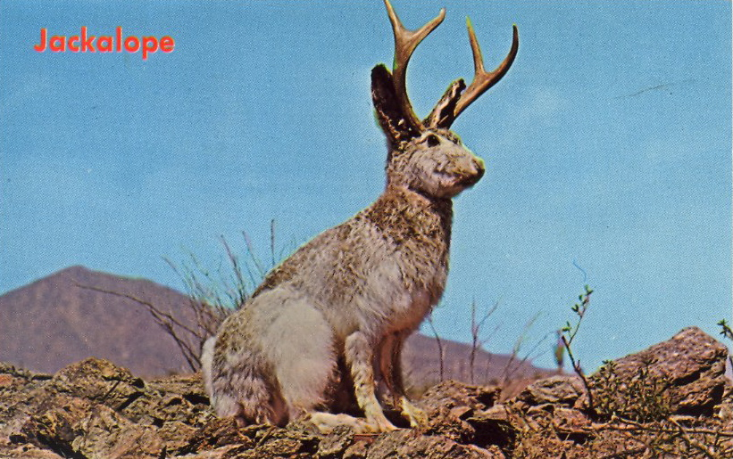preserving culture or a brief history of the jackalope dilettante